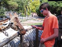 Cole and the giraffes
